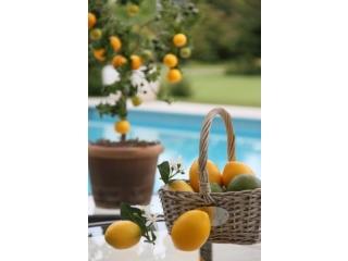 Fructe artificiale