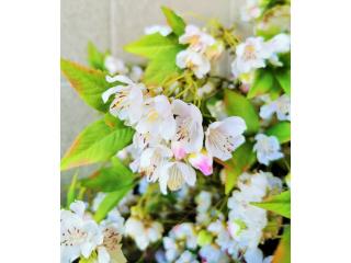 "Floare artificiala ""Crategus"" h93 cm,white, 1 buc."