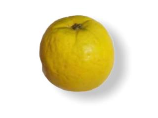 "Fruct artificial ""Mandarina"", D 8 cm, 1 buc."