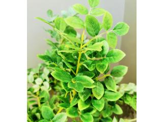"Floare artificiala ""Folia acacia"" h83cm, green, 1 buc."