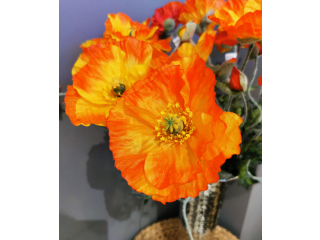 "Floare artificiala ""Papavero'"" ,H70CM,orange1 buc."